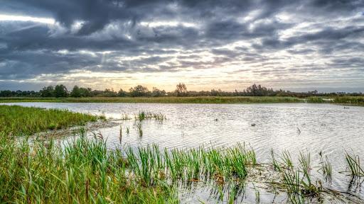 A saltwater marsh at dawn
